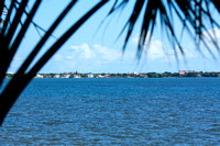 Indian River framed by palm tree